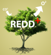 Workshop internacional do REDD+